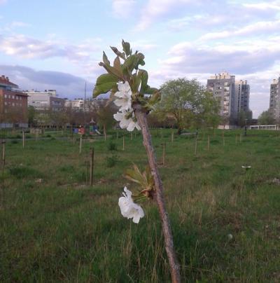 LakuaKoLore - primeras flores primavera 2017