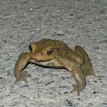 Foto del perfil de Iturralde
